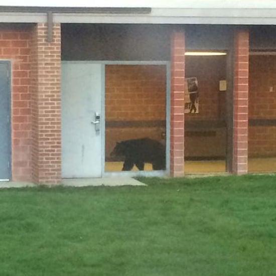Black Bear at Bozeman High School in Montana