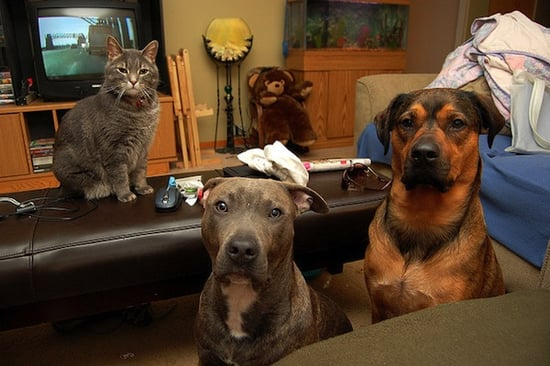 Cats vs. Dogs, a Competition for the Ages