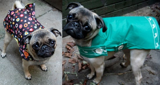 Sugar Shout Out: Stylish Eco Friendly Coats For Your Pets