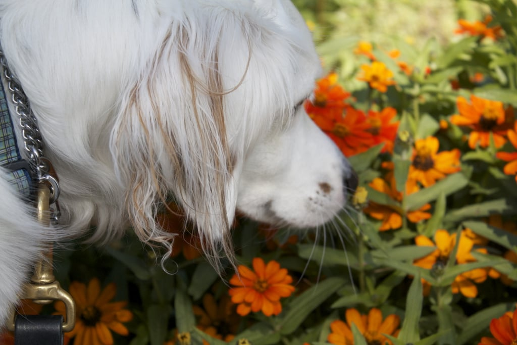 Orange You Going to Smell That?
