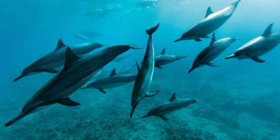 Hawaii Wants People To Stop Swimming With Dolphins So They Can Get Some Peace And Quiet