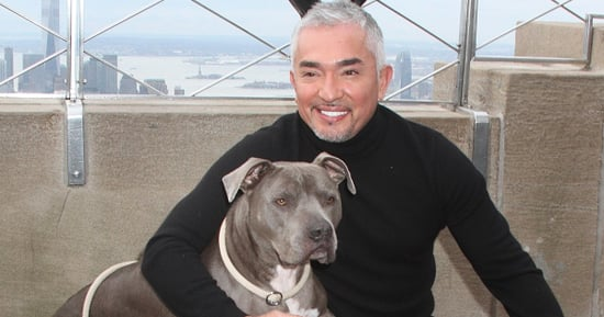 'Dog Whisperer' Cesar Millan Under Investigation For Possible Animal Cruelty