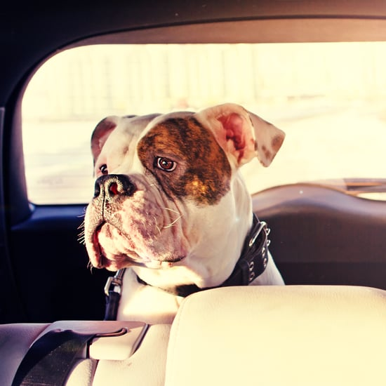 Can I Leave a Dog Inside the Car?