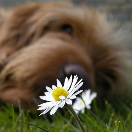 Pictures of Dogs and Flowers