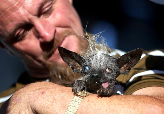 The World's Ugliest Dog 2016 Is Announced — and We Think She's Pretty Adorable