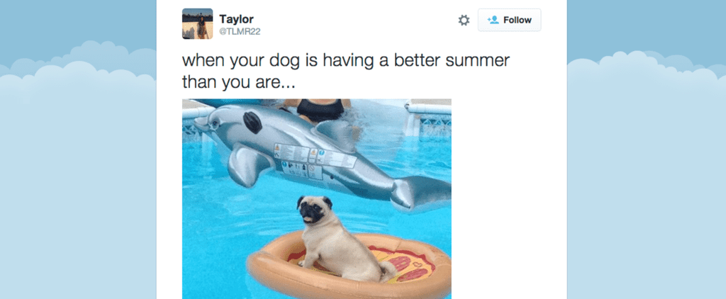 These Dogs Had the Best Summer Ever