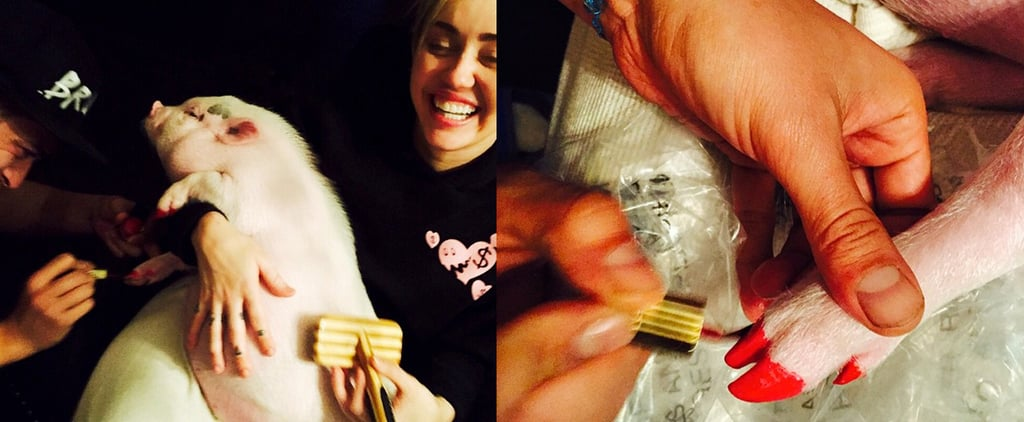 Is It Ethical For Miley Cyrus to Give Her Pig a Pedicure?