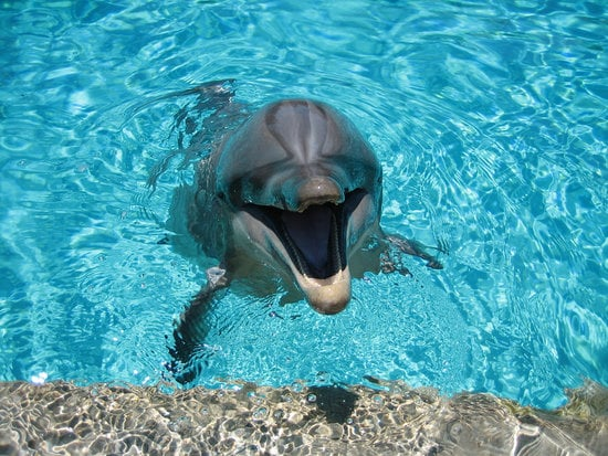 Dolphins as Midwives