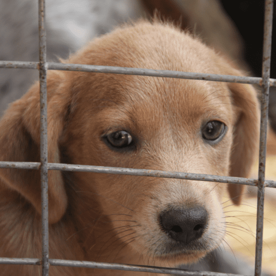 Ways to Help at Animal Shelters
