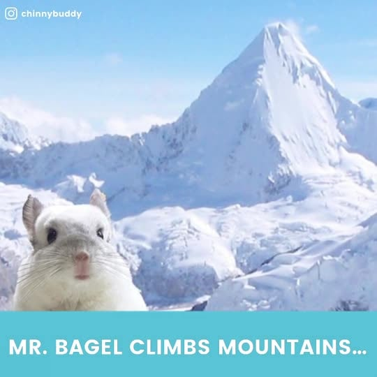 From INSTANT: Meet Mr. Bagel, the World's Cutest Pet Chinchilla