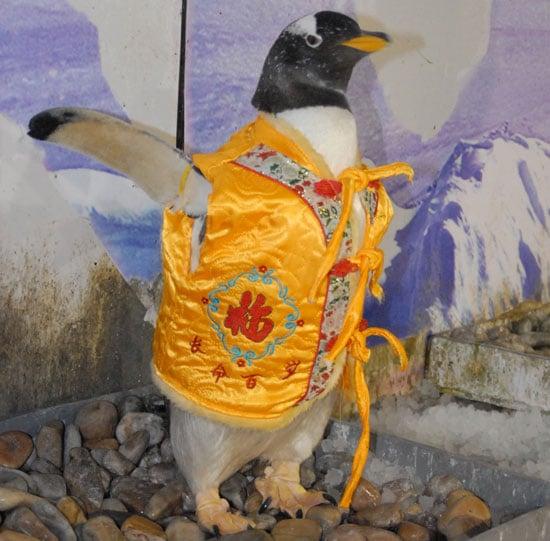 chinese new year, penguins, china