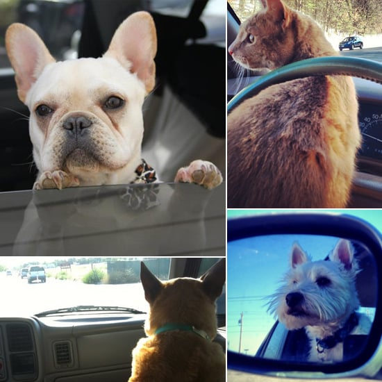 Gonna Catch Me Ridin' Dirty: Dogs and Cats Stake Claim in the Car