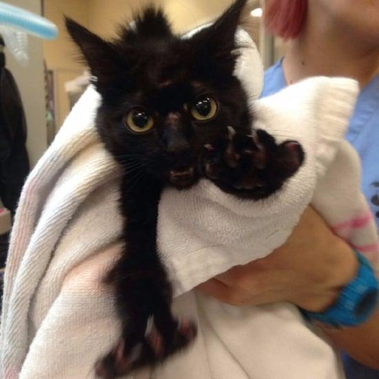 Cat Found at San Jose Sharks Hockey Rink
