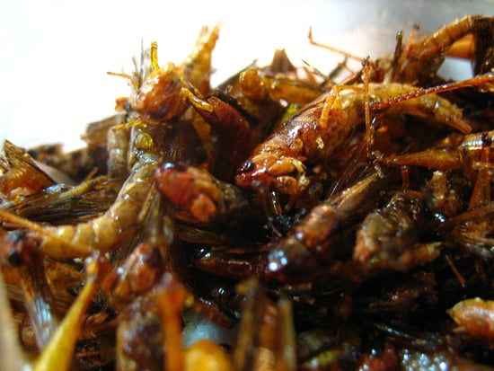 Would You Eat This Grasshopper Snack?
