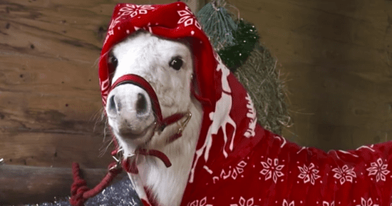 Mini Pony Foursie Is The Cutest Thing You'll See This Winter