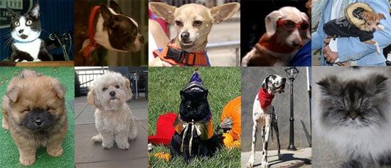 Most Missed Celebrity Pet or Celebripup of 2009?