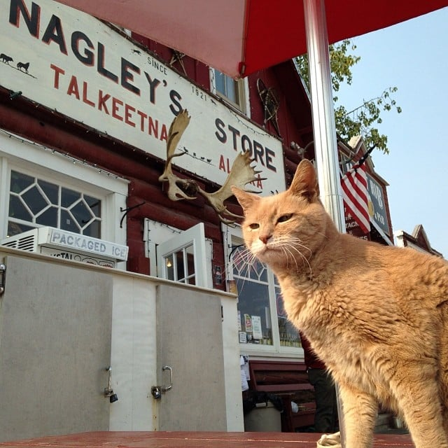 The Mayor of an Alaskan Town Is a Cat