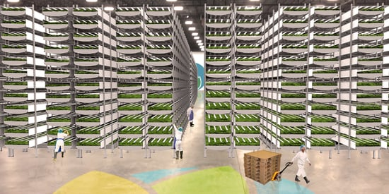 Inside The High-Tech Farm Growing Kale In An Old Paintball Arena
