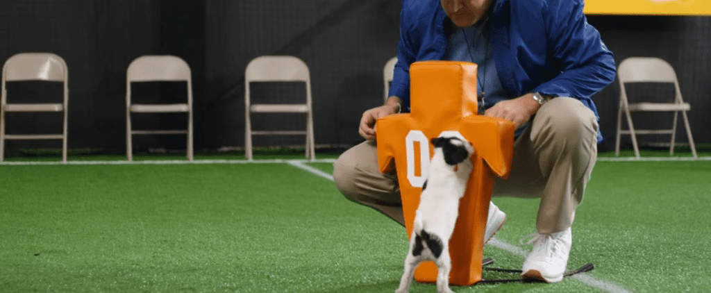 What Does It Take to Be a Puppy Bowl Puppy?