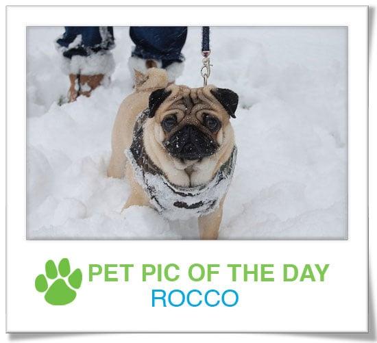Pet pics on PetSugar 2009-01-26 09:30:31