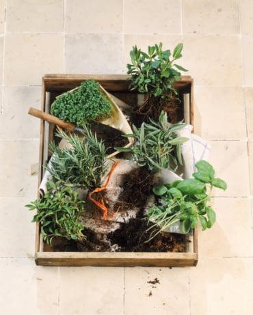 Ways to Make Your Kitchen Greener