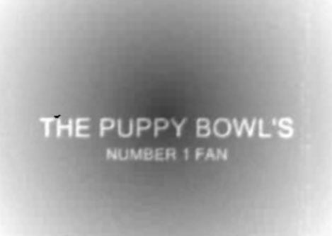 Will Your Pets Watch Puppy Bowl V?