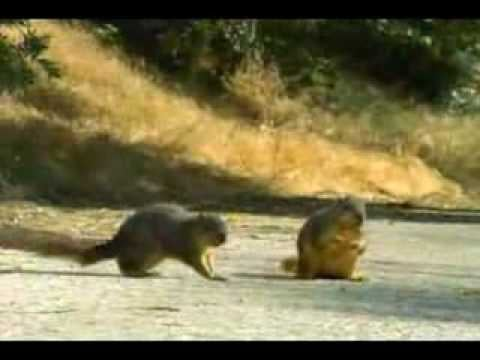 Squirrels Who Don't Look Before Crossing