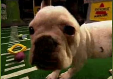 The Superbowl Done Doggie Style