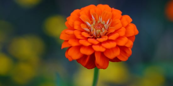 A Lesson in Love from My Mother's Marigolds