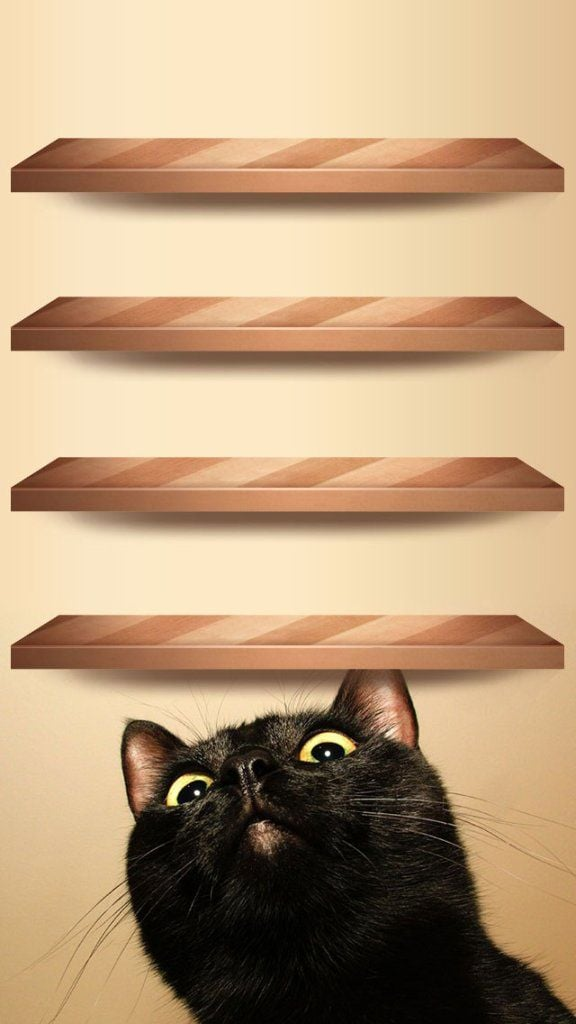 Curious Cat Wood Shelves