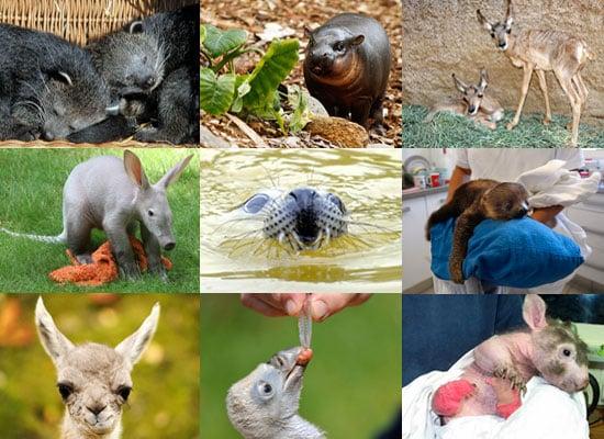 Odd Zoo Babies Born in 2010