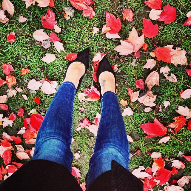 Walk in the Leaves