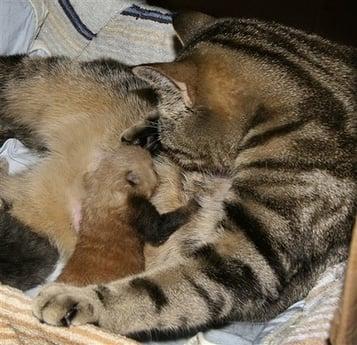 Baby Red Panda Dies, Mama Cat's Kittens Survive