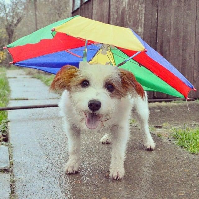 Who Cares If It's Raining?