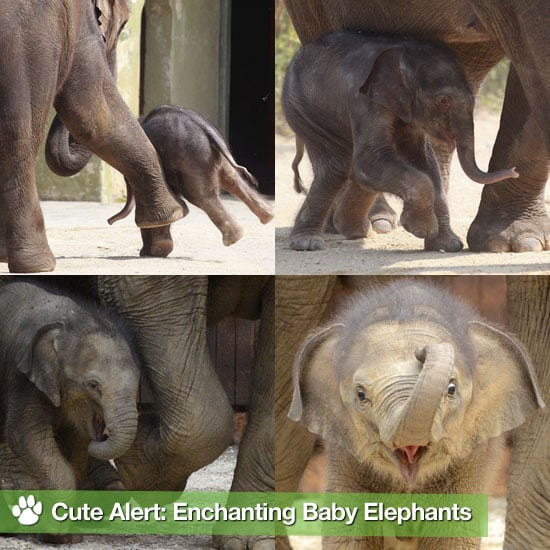 Pictures of Baby Elephants