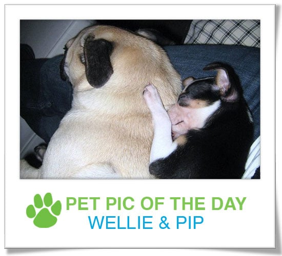 Pet Pics on PetSugar 2009-01-14 09:30:55