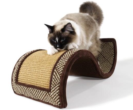 Dream Curl Takes Cat For a Magic Carpet Ride