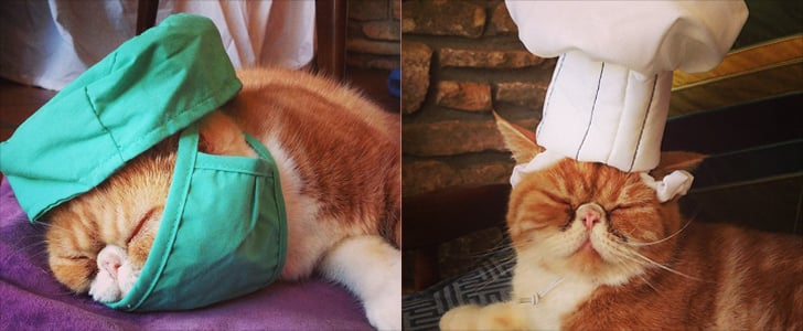 Play Dress Up With Colonel Handsome Mustard the Cat