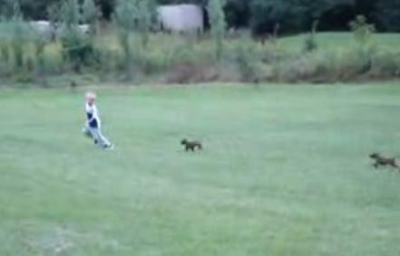 Cute Alert: Puppies Chase Boy