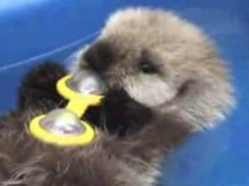 Capers Is Otterly Adorable!