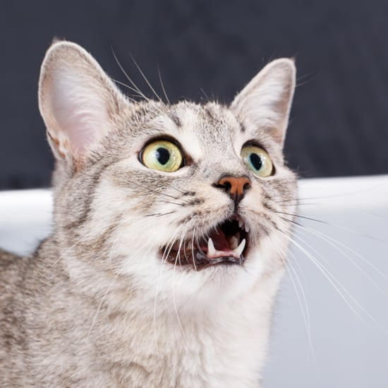 Dental Health in Cats