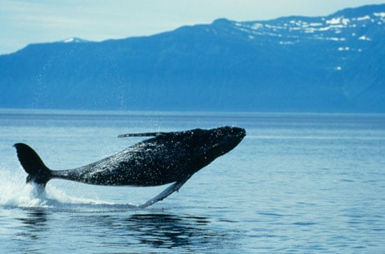 To the Rescue: Choosing a Whale Watching Tour