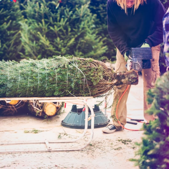 The Best Christmas Tree For the Environment