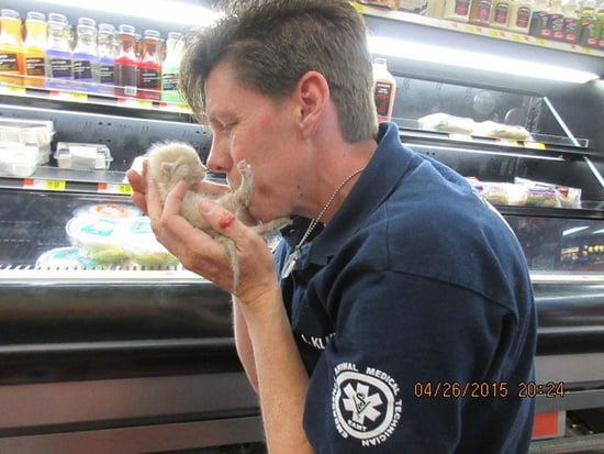 Kittens Rescued from Fridge at Arizona Walmart