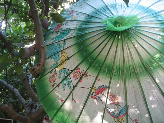 Midday Muse: Parasol and Plums