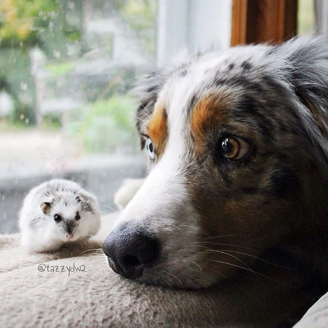 Tiny Friend