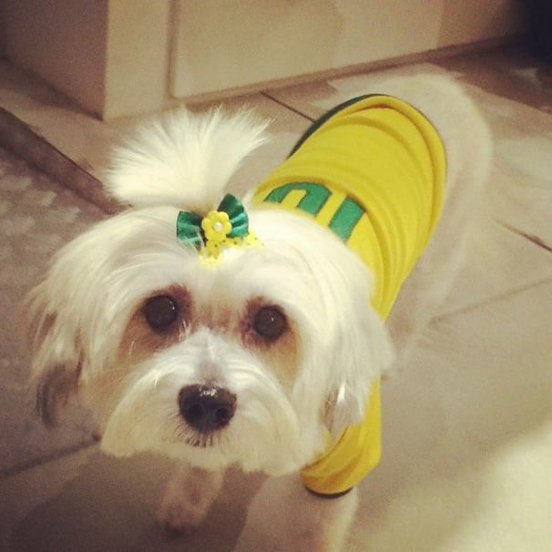 Being a Brazil fan has never looked so cute. We want to know where to get her hair bow.  Source: Instagram user lisiaesteves