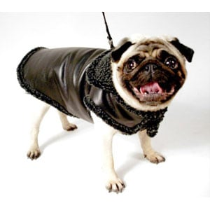 Springtime Coats for Pampered Poochies