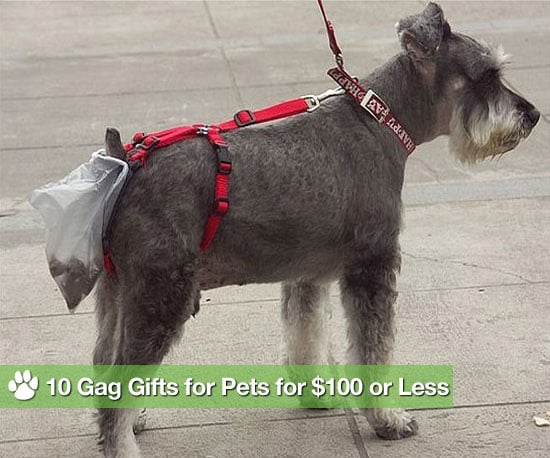 10 Gag Gifts For Pets For $100 or Less