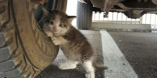 Stray Kitten Finds Forever Home After Heartwarming Chance Encounter